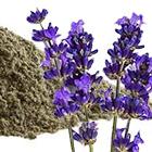 Poeder gemaakt van lavendel